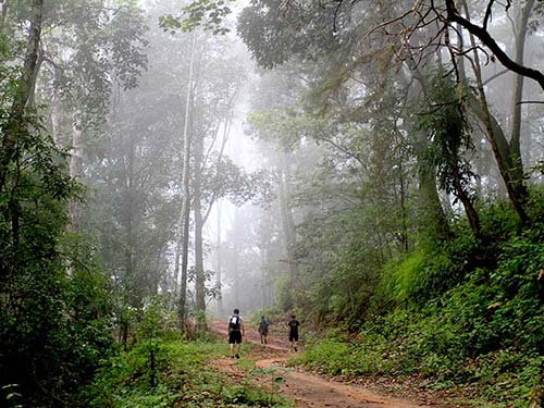 Forest in Chiang Dao National Park.
