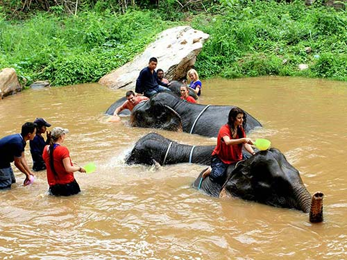Elephant camp, bath in the river.