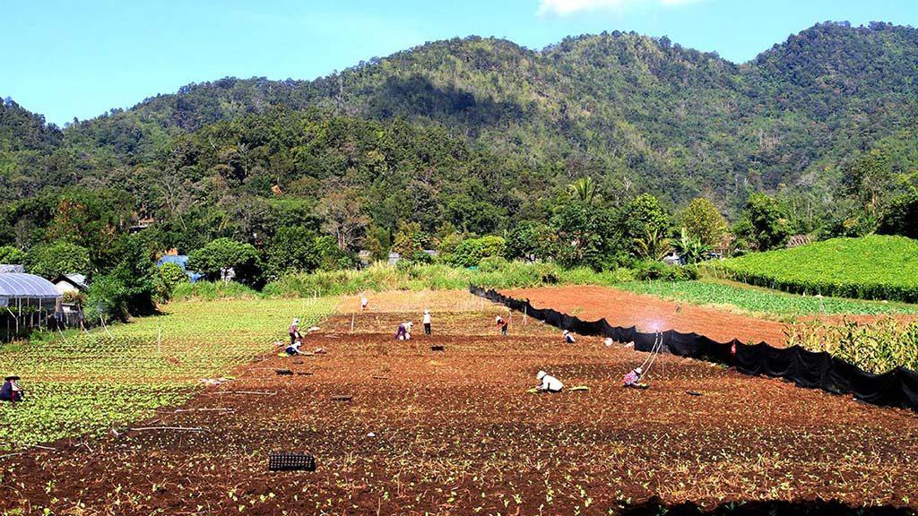 Samoeng strawberry plantations.