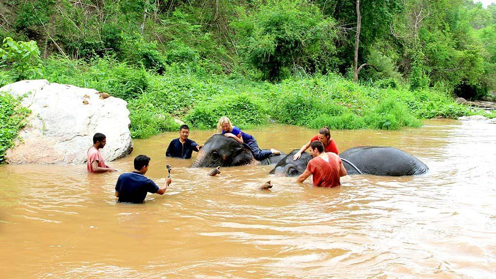 Elephant camp, Chiang Mai.
