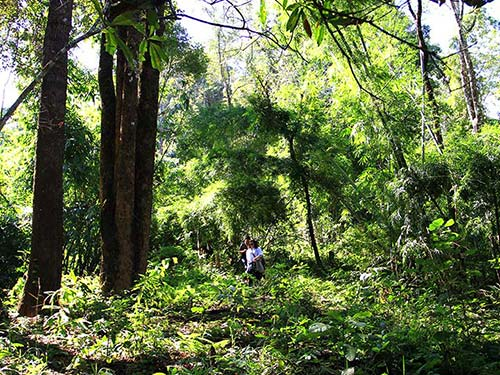 Lush wet forest in Chiang Rai.