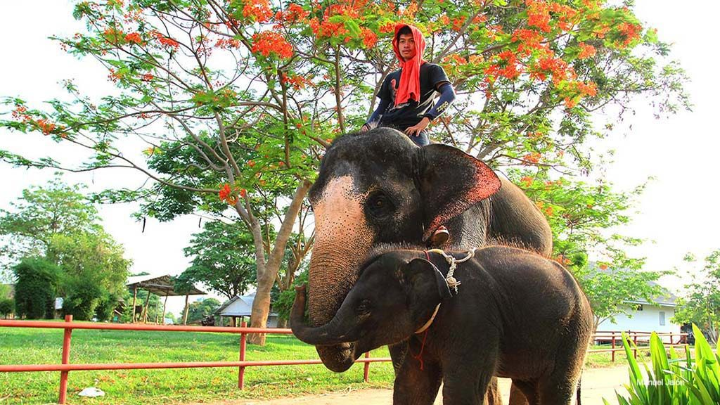 Elephants live with humans in Isaan.