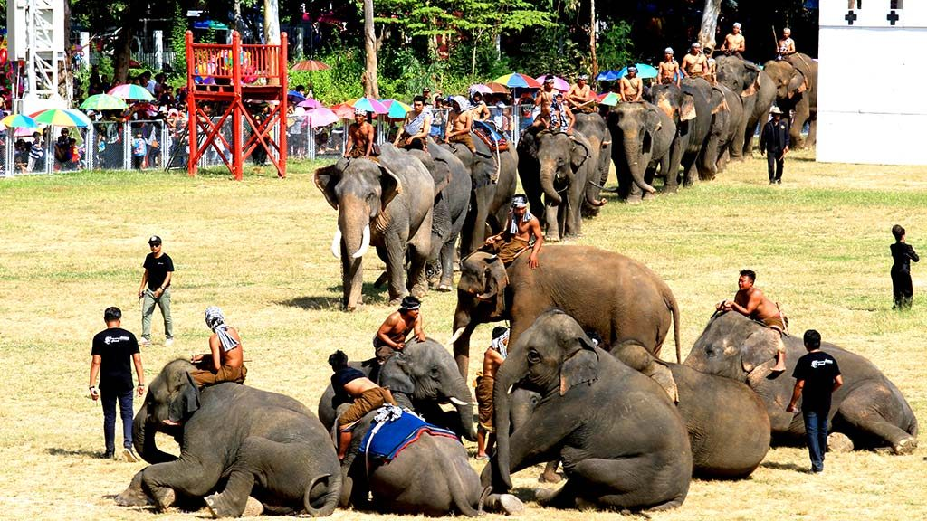Round-up and elephant show, Surin.