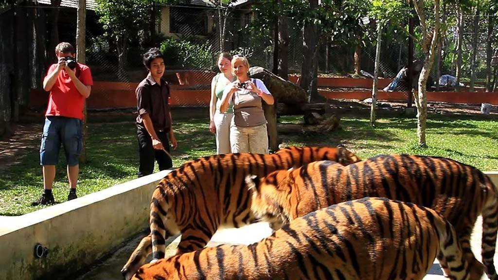 The Tiger Kingdom.