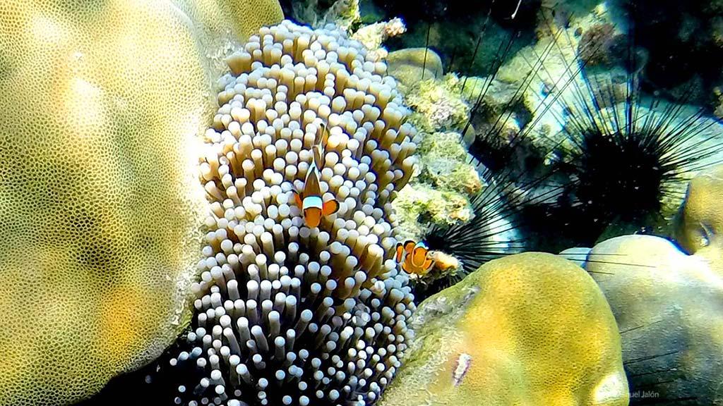 Koh Tarutao Coral.