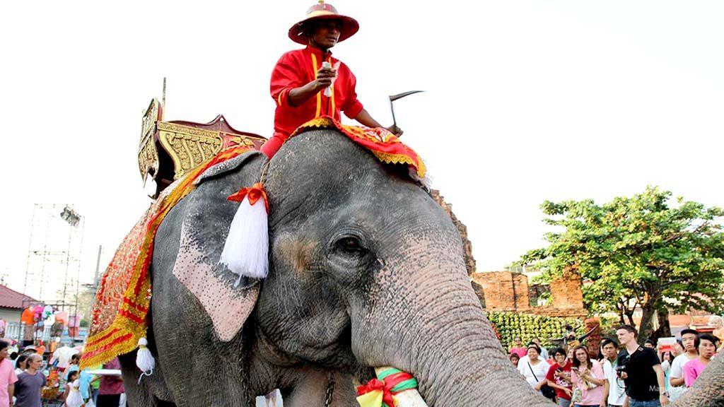 Elephant in Lopburi.