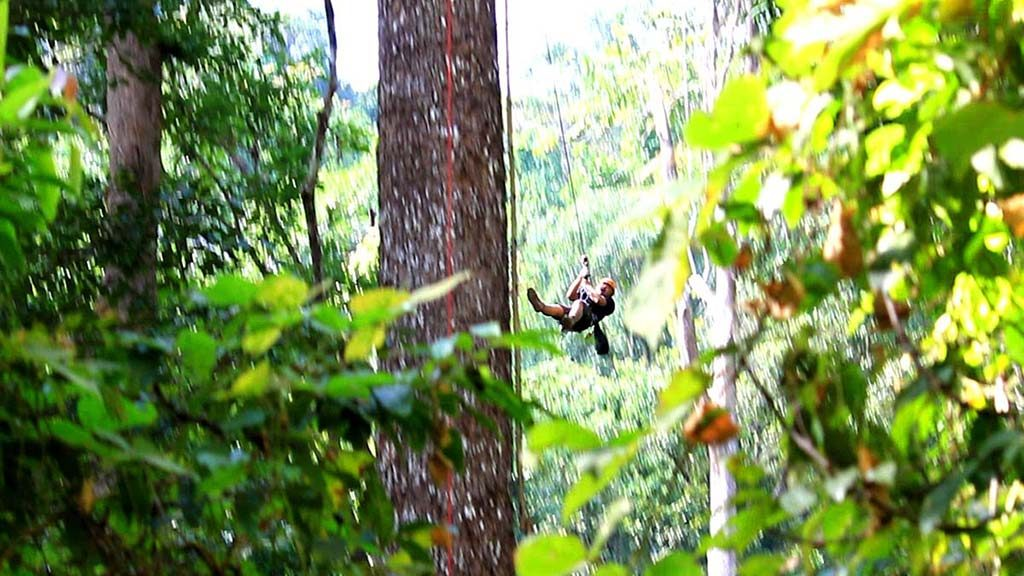 Forest and zipline.