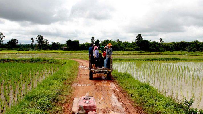 Rice fields in the monsoon season