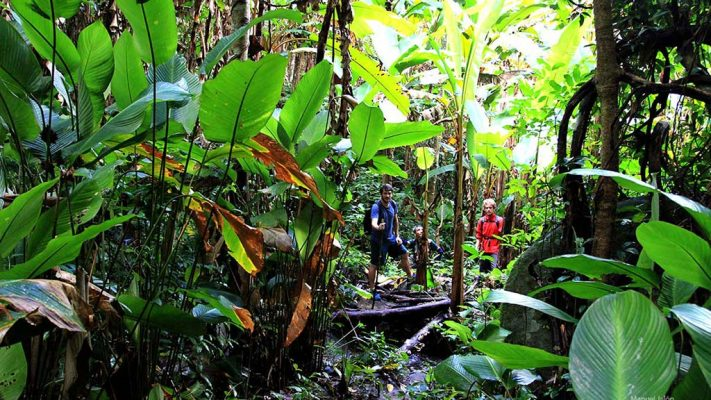 Some travelers hikking through a jungle.